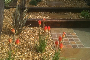 Steps with gravel and kniphofia