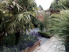 Borders with lavender and ferns